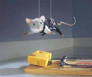 7d620-mouse-cheese-trap